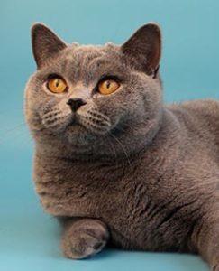 кошка daphne from hanna