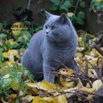 dante_from_hanna_blue_cat
