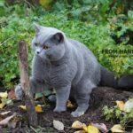 dante_from_hanna_british_cat