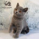 edda_from_hanna_cat
