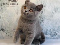 Edda from Hanna