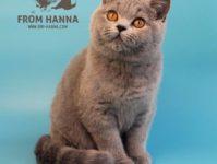 Eika from Hanna
