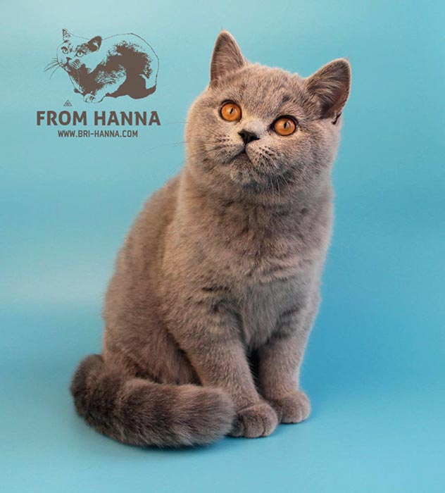 eika_from_hanna_blue