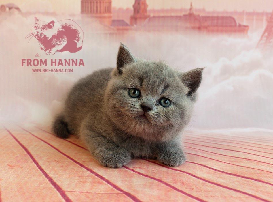 eika_from_hanna_bsh