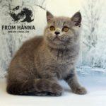 eika_from_hanna_cat