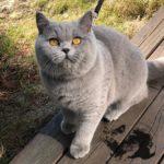 eika_from_hanna_cat_foto