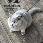 eika_from_hanna_cats