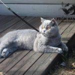 eika_from_hanna_instacat