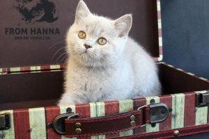 Договор купли-продажи котенка