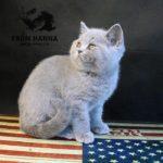 eyja_from_hanna_kitten