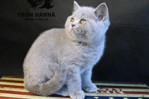Eyja from Hanna