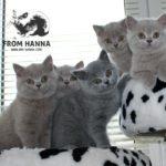 помет_A_from_hanna