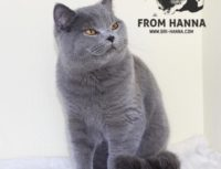 Luxury Charlie of Hanna