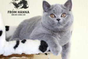 Luxury Fraya of Hanna