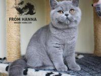Luxury Lina of Hanna