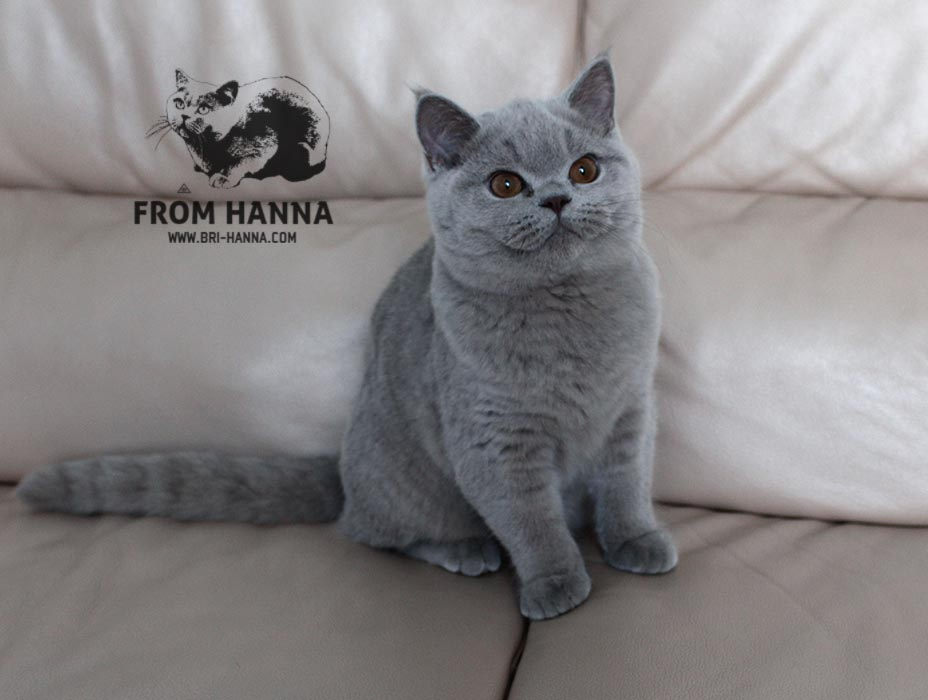 luxury_orion_of_hanna_lilac
