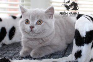 Luxury Vazilis of Hanna