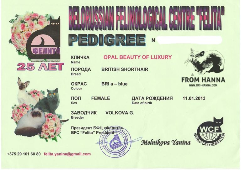 pedigree-Opal-Beauty-of-Luxury