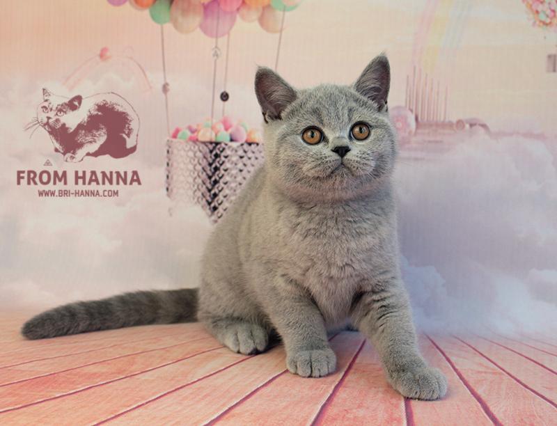 frodo3.5m_bri-hanna_cat