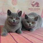 litter_from-hanna_3m