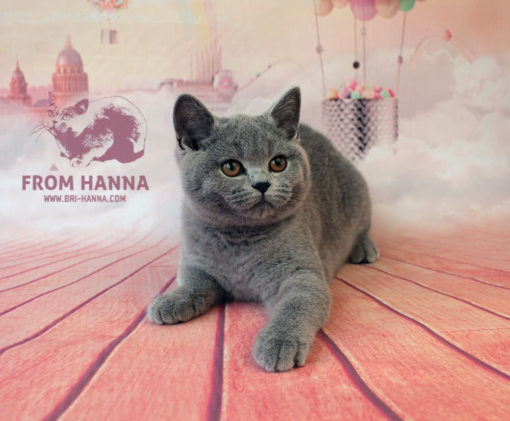 cat-folka-from-hanna-3.5month