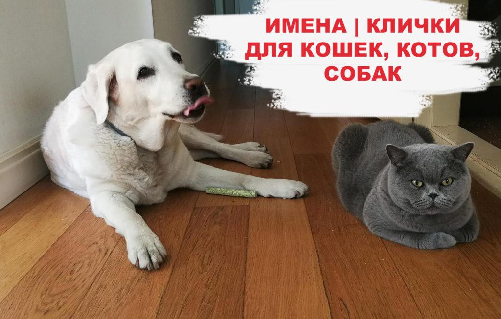 imena-klichki-dlja-koshek-kotov-kotjat-sobak