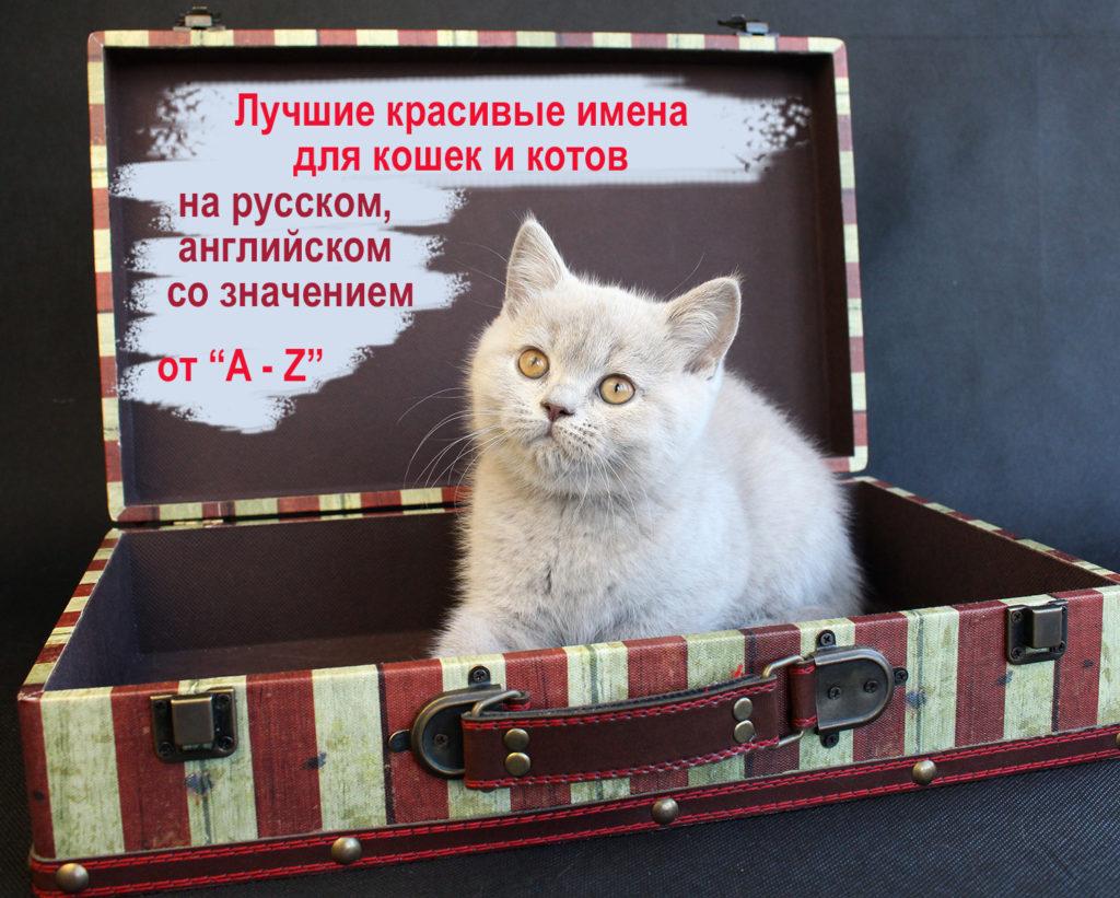 kak-nazvat-kotenka-kotjat-koshku-devochku-kota-malchika-krasivye-luchshie-imena-klichki