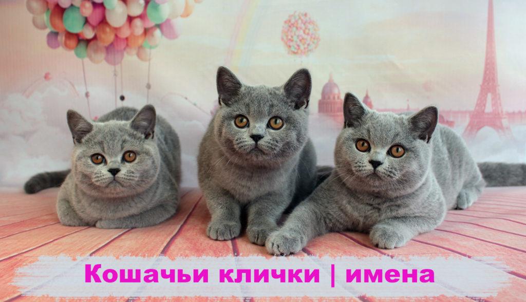 koshachi-imena-klichki-dlja-devochek-malchikov-prikolnye-smeshnye-na-bukvu-alfavita
