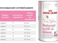 Как выбрать чем кормить британского кота, кошку или котенка