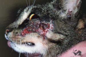 Диетотерапия против пищевого дерматита у кошек