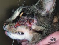 Диетотерапия против пищевого дерматита у кошек.