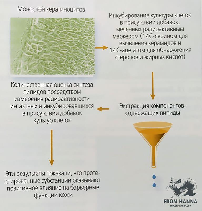 osenka-sinteza-lipidov-kozhi