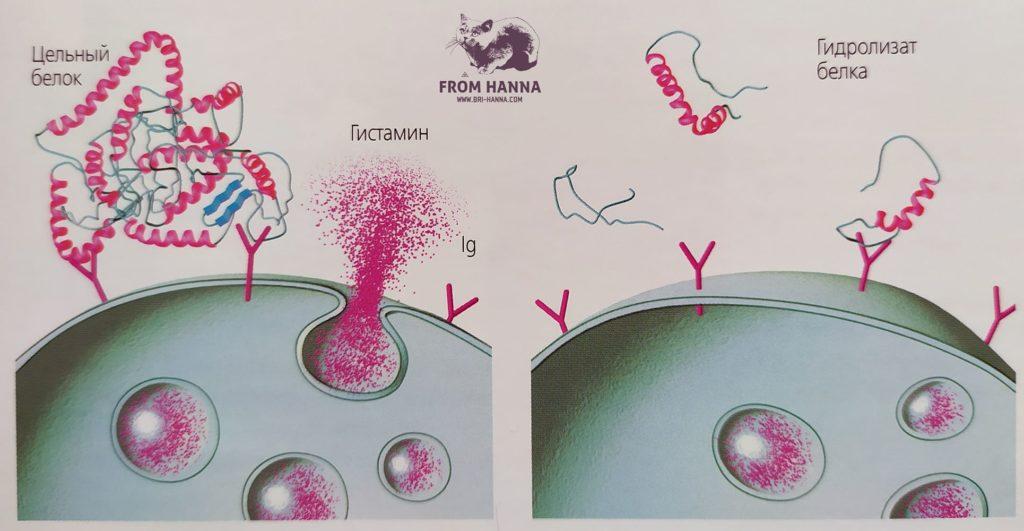 ponizhennaja-allergentnost-gidrolizatov-belkov-po-sravneniyu-s-selnymi-belkami