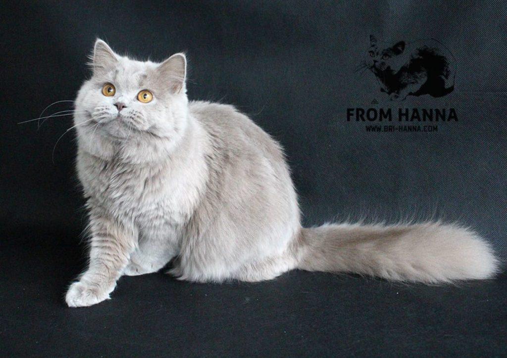 standart-wcf-BLH-cat