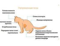 Диета при заболеваниях мочевого тракта кошек, вопрос – ответ