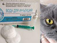 Почему у кота слезятся глаза, как и чем лечить британцев