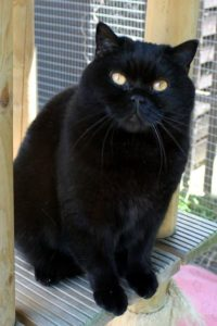 bri-n-black-cats