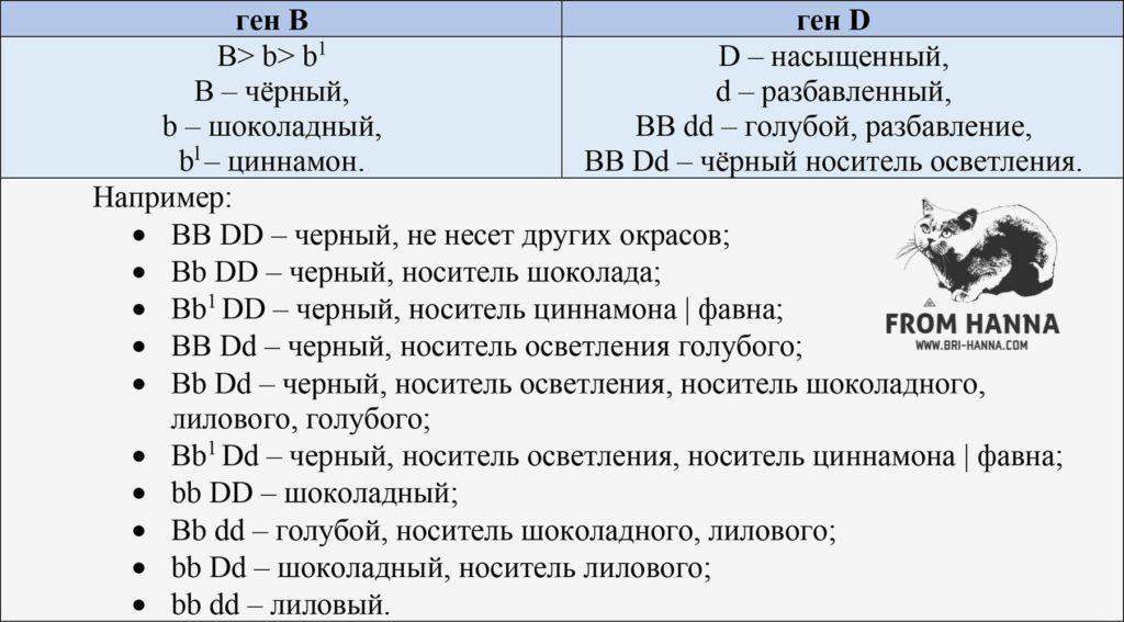 gen-b-i-gen-d-chernogo-okrasa-britanskikh-koshek