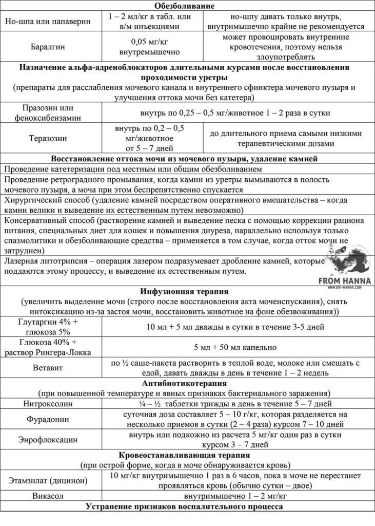 lechenie-mkb-veterinarami-skhema