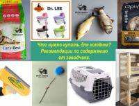 Рекомендации по содержанию и адаптации котенка из питомника From Hanna владельцам.