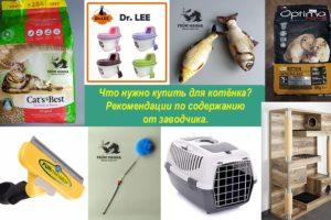 Рекомендации по содержанию и адаптации котенка из питомника From Hanna владельцам