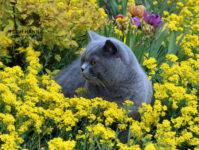 Аллергическая реакция у взрослых, детей на кошек: причины, симптомы, лечение