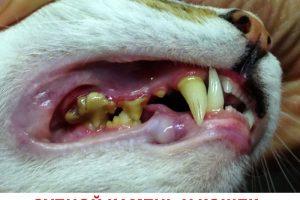 Правильный уход за зубами питомца, строение челюсти кота, болезни зубов