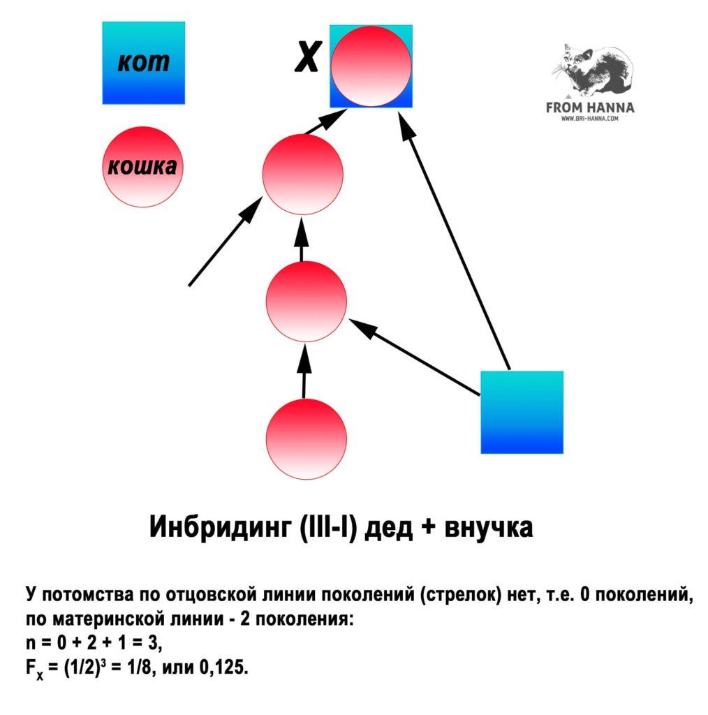 ded-vnuchka-3-1