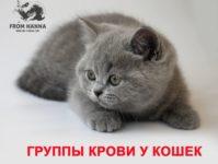 Группы крови у кошек: виды, какая самая редкая, как определить, совместимость