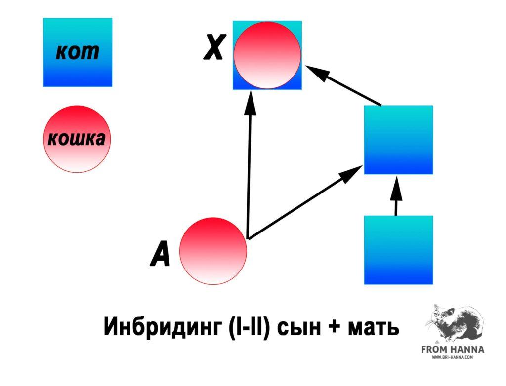 syn-mat-1-2
