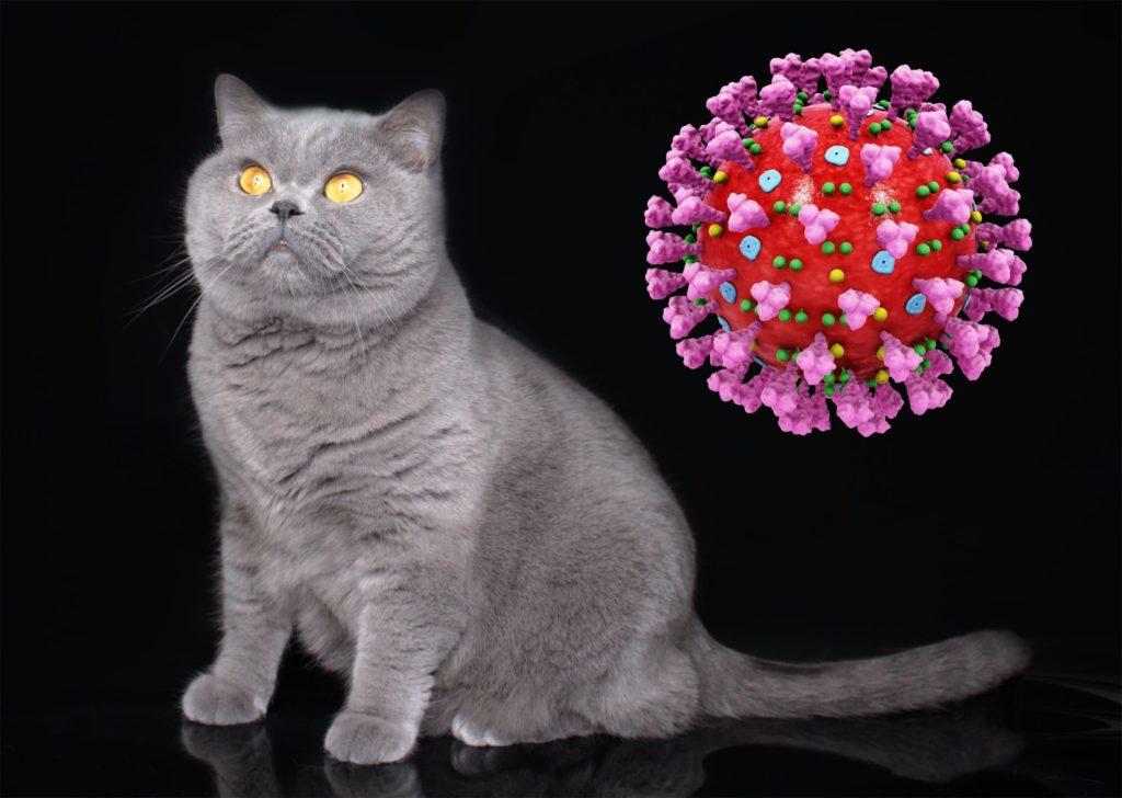 koronavirus-titry-fip-u-zhivotnykh-koshek-vaksina-psr-kishechnyi