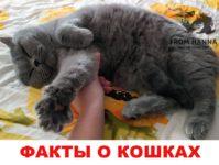 Более 100 интересных, исторически страшных фактов про котиков