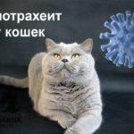 Герпес у кошек | ринотрахеит — симптомы, схема лечения