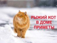 Что несёт в дом рыжий кот — поверья, суеверия, приметы